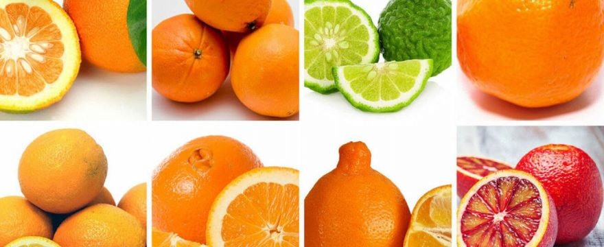 Best Oranges for Juicing, best oranges for juicing uk, best type of oranges for juicing, best oranges for juicer